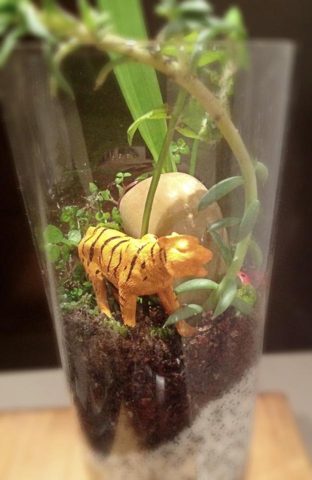 Tiger terrarium